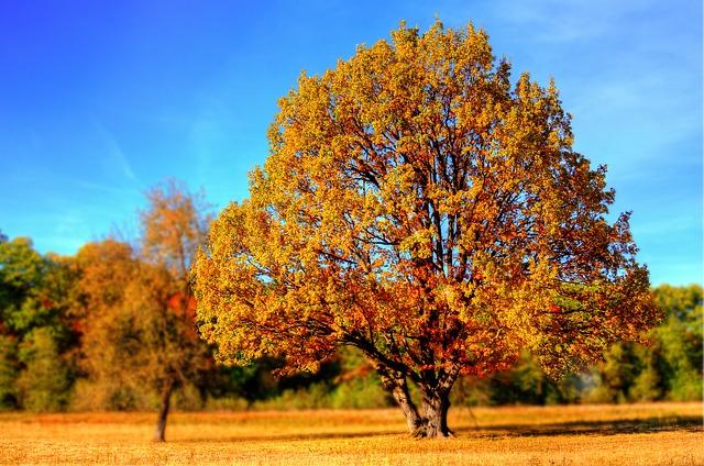 Bem vindo Outono!